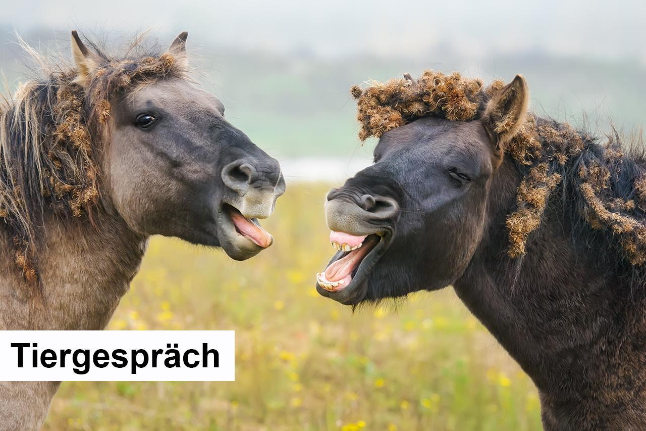 055 - D - Tiergespraech - Hoerverstehen.jpg